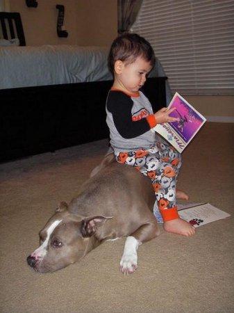 Дети и животные прикольные и не